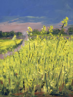 Rapeseed Flowers, Angles-sur-L'Anglin